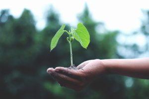 growth-mindset-tutoring